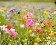 Wild Flower Seeds and Matting